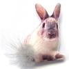 กระต่ายนั่ง