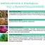 Sena Marine Plankton Water Serum Concentrate 150ml. thumbnail 5
